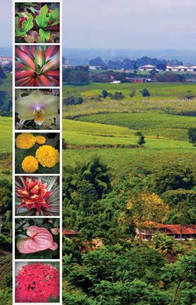 Colviveros cultivo producci n comercializaci n for Produccion de plantas ornamentales